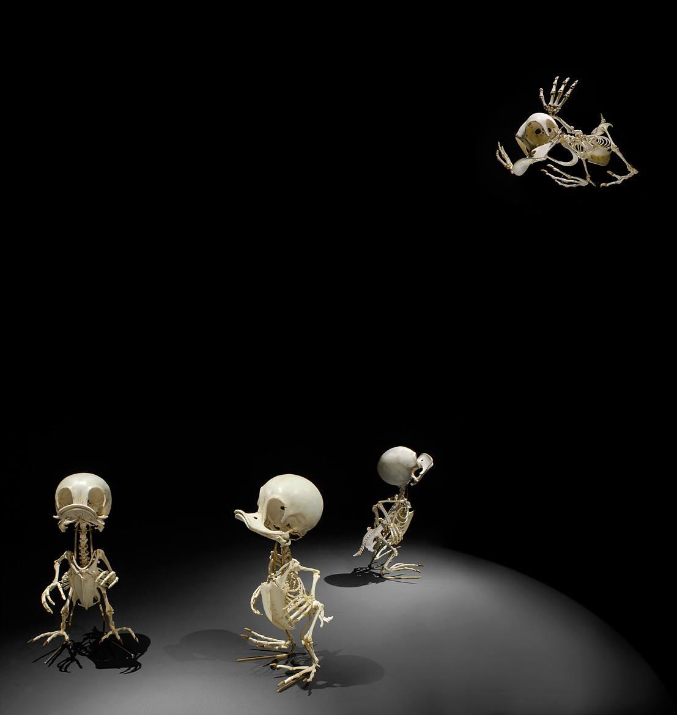 La anatomía de varios personajes animados   Vistazo