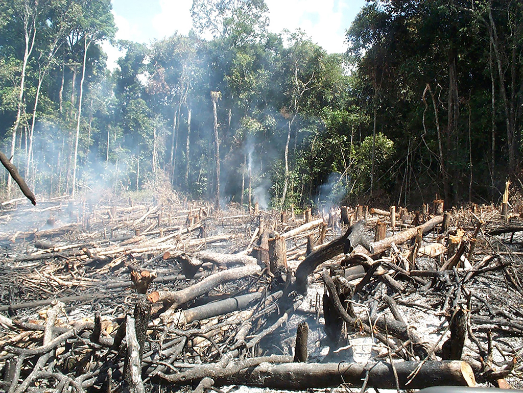 effect of deforestation in extinsion in flora and fauna What is deforestation  forest areas fire claiming that the forest land is fertile due to forest's flora and fauna  it is known as greenhouse effect.