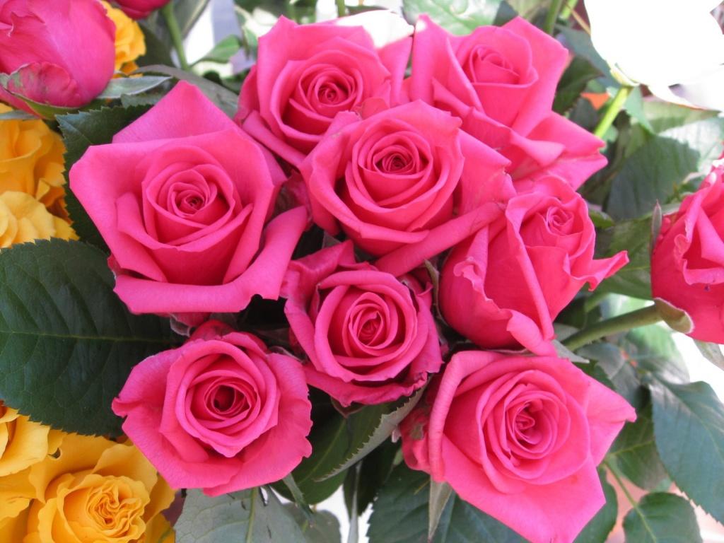Rosas ecuatorianas en famoso programa de la tv china vistazo - Rosas chinas ...