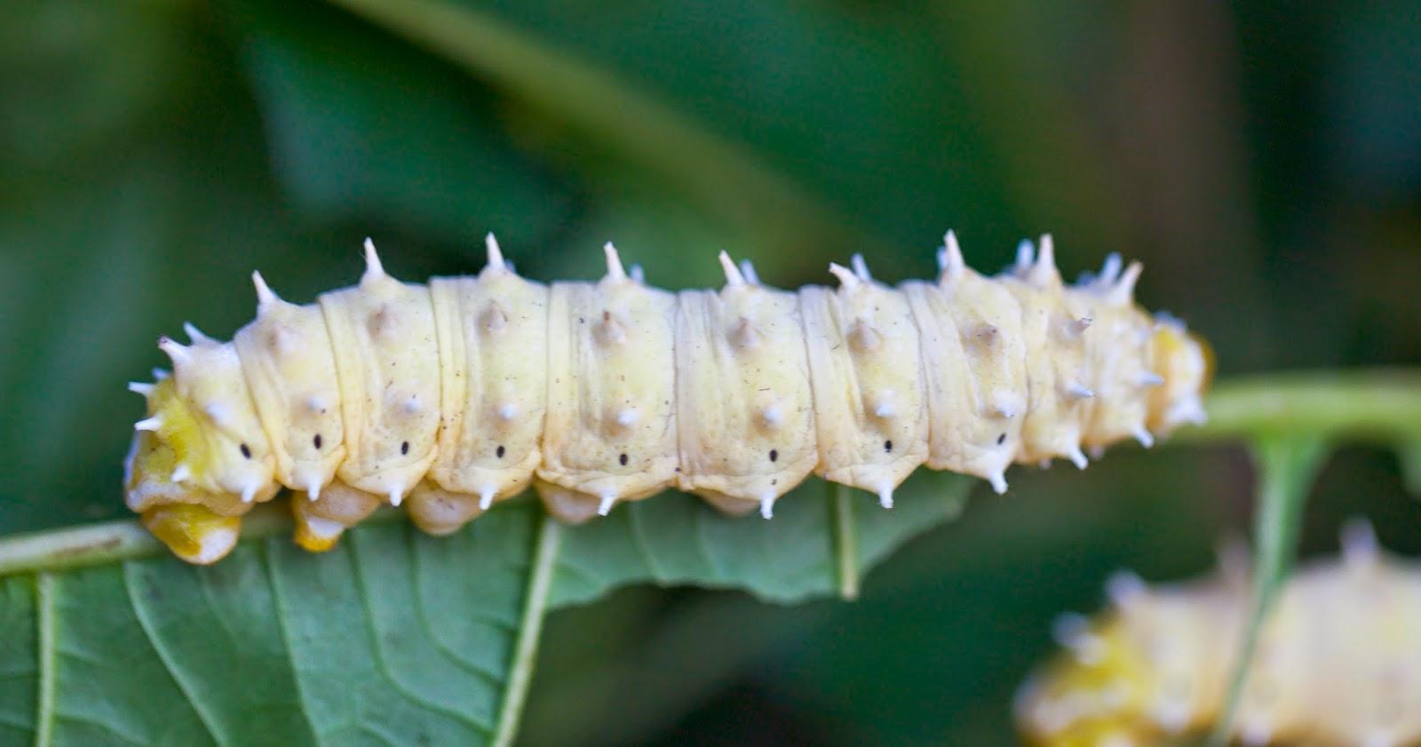 Medio Ambiente: Descubren un gusano que come plástico