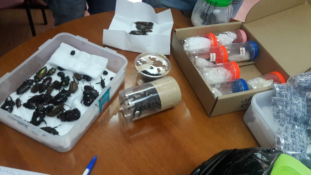 QUITO, Ecuador.- El científico llevaba entre sus pertenencias 250 ejemplares de distintos arácnidos e insectos. Foto: Ministerio del Ambiente.
