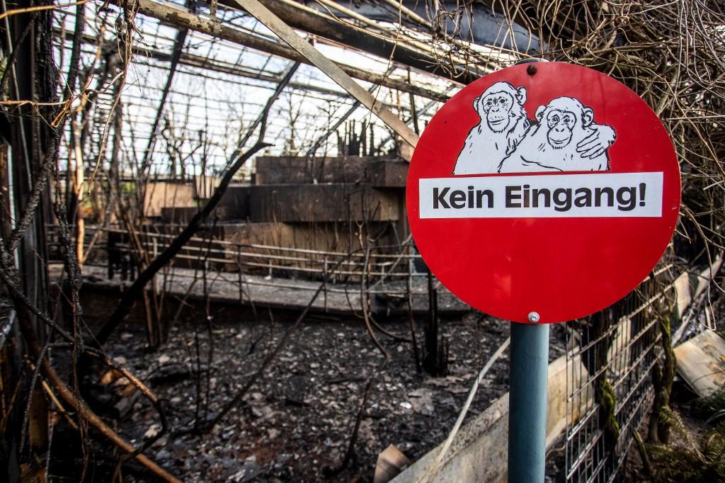 """Resultado de imagen de Incendio en zoológico alemán dejó a unos 30 monos del recinto muertos"""""""