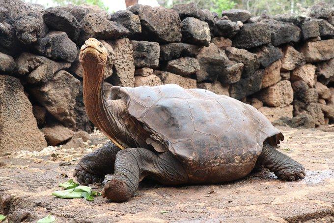 Diego, la tortuga que logró salvar su especie de la extinción