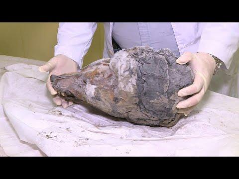 Hallan una gigantesca cabeza de lobo de 32.000 años | AFP