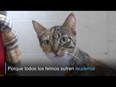 "La ""casita gatuna"", refugio de gatos con leucemia felina"