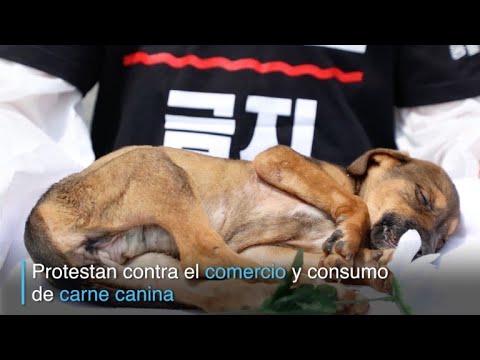 Reclaman prohibir carne de perro en Corea del Sur