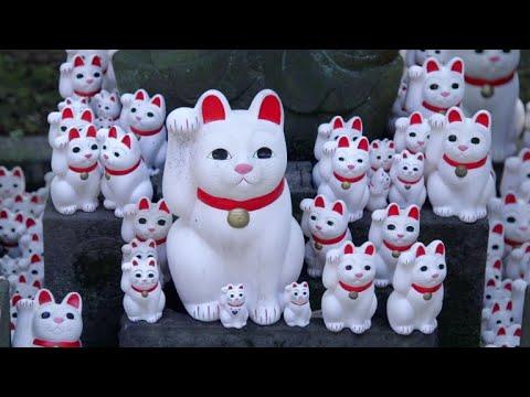 """Templo de """"gatos de la suerte"""" en Tokio atrae a 'instagramers'"""