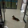 Xiao Bao esperó a su dueño afuera del hospital, pero el hombre ya había fallecido cinco días después de ser internado.