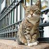 Un gato en el Hermitage de San Petersburgo. Foto: wikimedia commons