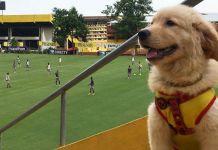 Coloso es un golden retriever que llegó desde cachorro, en 2017, a las instalaciones de concentración de Barcelona SC. Disponía de cuentas en redes sociales e interactuaba con directivos, administrativos y jugadores.