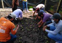 Los habitantes de las comunas reciben capacitaciones de cultivo en casa.