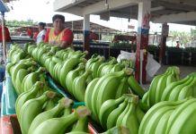 De enero a julio del presente año, las ventas de banano al extranjero llegaron a 2.314 millones de dólares.