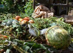 El monto de desperdicios alimentarios en el país equivale a $334 millones anuales.