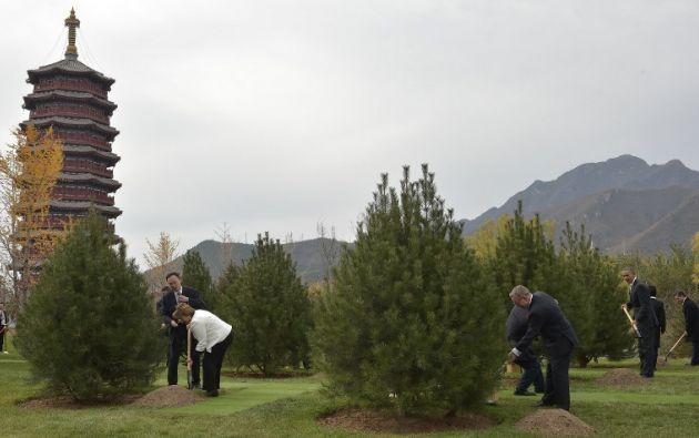 Armados con una pala, los mandatarios plantando 21 árboles. Foto: AFP