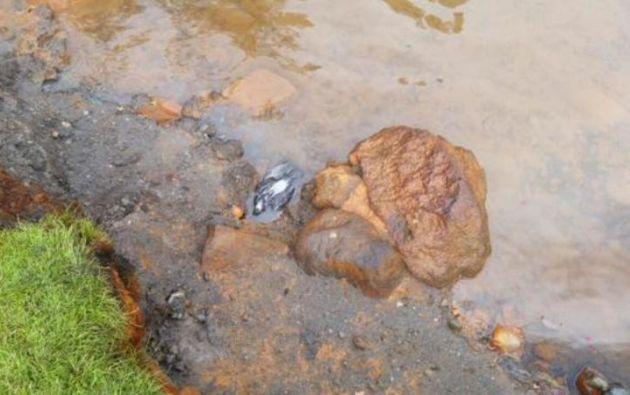 Especialistas tomaron muestras del agua del reservorio para determinar su nivel de toxicidad. Foto: Ministerio del Interior
