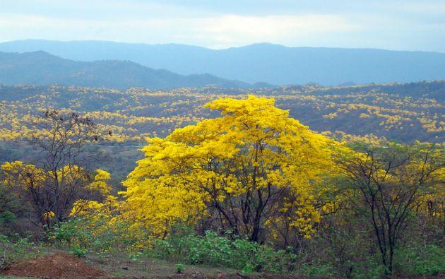 La reserva Bosque Seco.