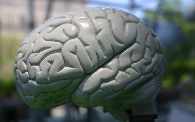 Las nuevas variantes genéticas están vinculadas al desarrollo y tamaño de algunas zonas del cerebro relacionadas con la memoria, la conducta y las emociones.