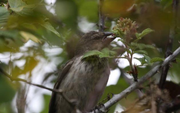 Las aves se pueden observar en el parque desde las 6:00. Foto: Cortesía.