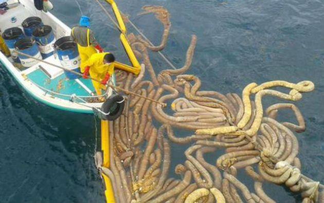 Continúan los trabajos de limpieza de combustible derramado. Foto: Twitter / Parque Nacional Galápagos