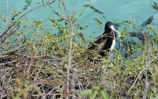 En un recorrido por las islas, se pueden apreciar distintas especies de aves. Foto: Thalíe Ponce