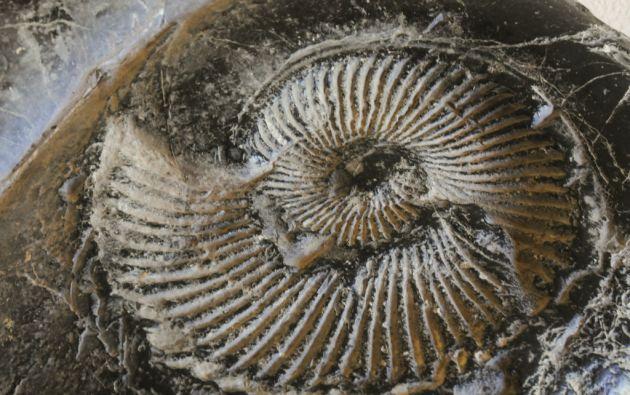 Se pueden encontrar fósiles petrificados de conchas, almejas, caracoles y amonites. Foto: Iván Navarrete
