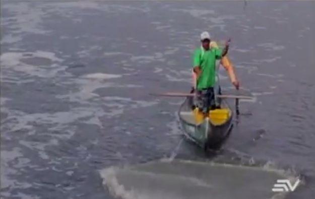 Camaroneros que tienen sus piscinas a lo largo del Golfo de Guayaquil han sido víctimas de 45 robos.