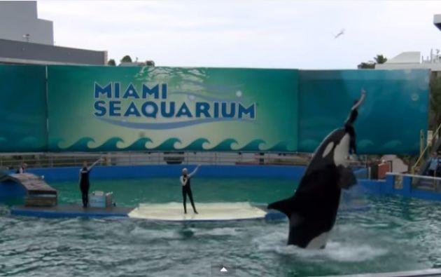 El animal está en Miami Seaquarium.