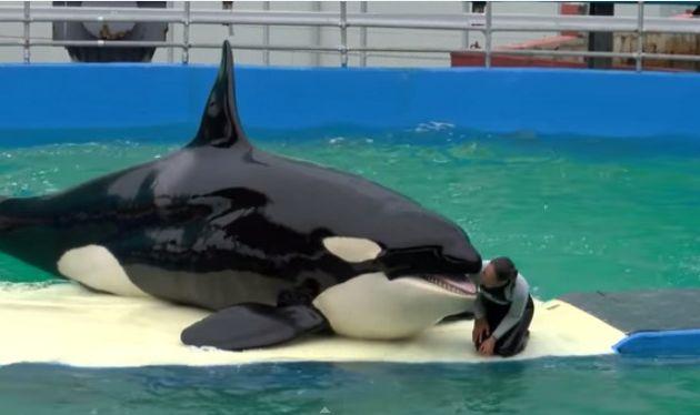 Lolita, con seis metros de longitud, vive en un tanque de 10 metros de ancho y seis metros de profundidad.