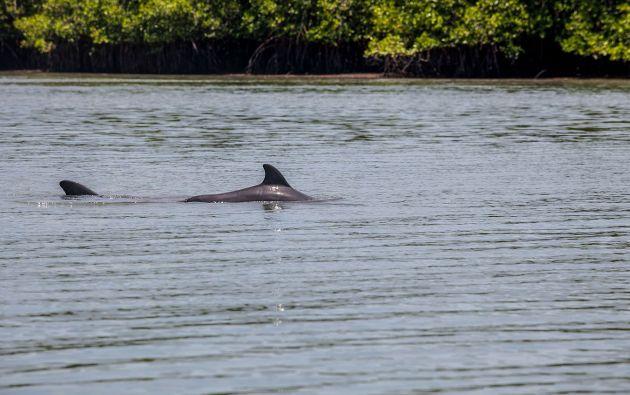 El costo del paseo para ver a los delfines es de 5 dólares.