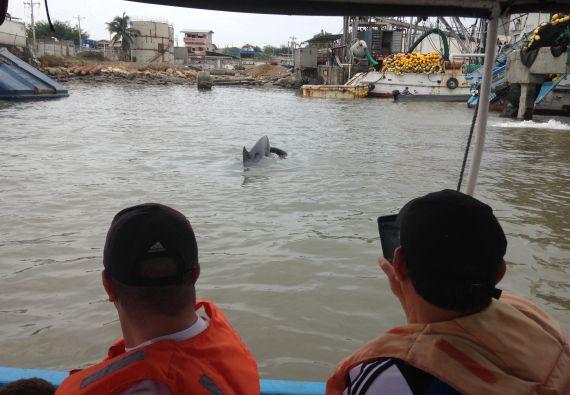 Los visitantes pueden observar muy de cerca a los delfines.