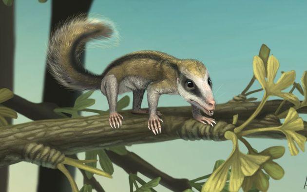 Una ilustración de la Universidad de Chicago reconstruye la apariencia y estilo de vida del Agilodocodon scansorius, Imagen: REUTERS