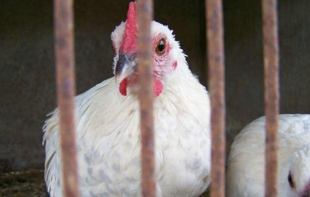 Se detectaron 50 casos de gripe aviar H7N9 en 15 de las 21 principales ciudades de la provincia de Cantón.