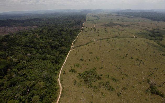 Debido a la tala de bosques, en estos 15 años se afectaron más de 608.000 hectáreas de selva.