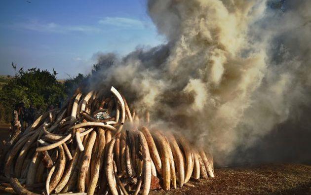 La cantidad incinerada representa un valor en el mercado de unos 30 millones de dólares. Foto: AFP