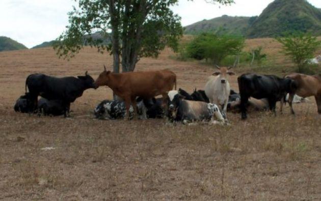 Los habitantes de estas zonas esperan que llueva pronto para que sus cultivos no sean afectados. Foto: Archivo / Ecuavisa