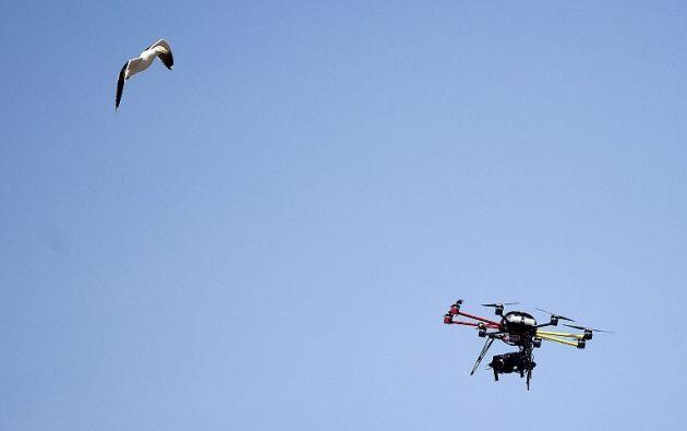 Una gaviota volando cerca de un dron. Foto: Archivo / AFP
