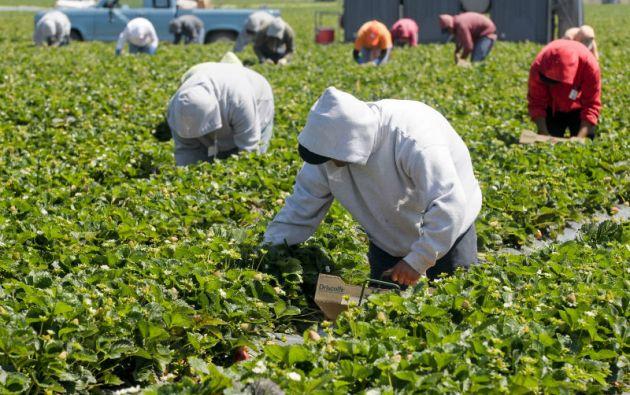 """""""El único número aceptable para nosotros es cero, que no haya hambre"""", señaló el representante regional de la FAO"""