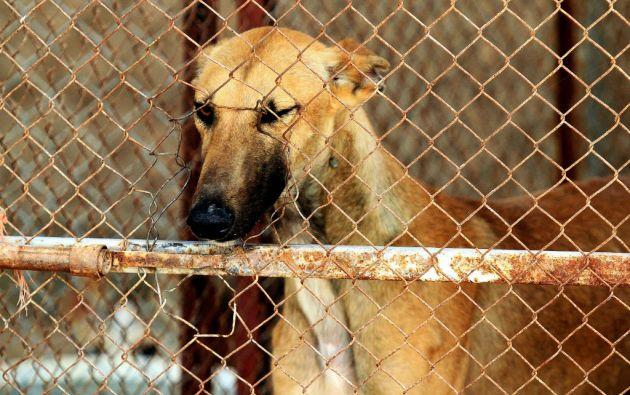 La sentencia, que puede ser recurrida, supone una victoria para los defensores de los animales en un país donde los poderes públicos, según ellos, son insensibles a la violencia animal.