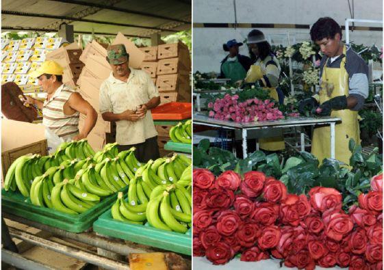 Banano, flores y conservas de atún figuran entre las exportaciones tradicionales. Fotos: Archivo Vistazo