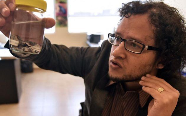 El biólogo Juan Manuel Guayasamín estima que podría haber otros anfibios con la misma capacidad de mutar de piel. Foto: AFP