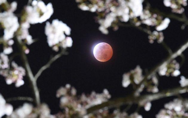 Una Luna roja se observó entre las flores de cerezo en Shiraishi, prefectura de Miyagi (Japón). Foto: REUTERS / Kyodo