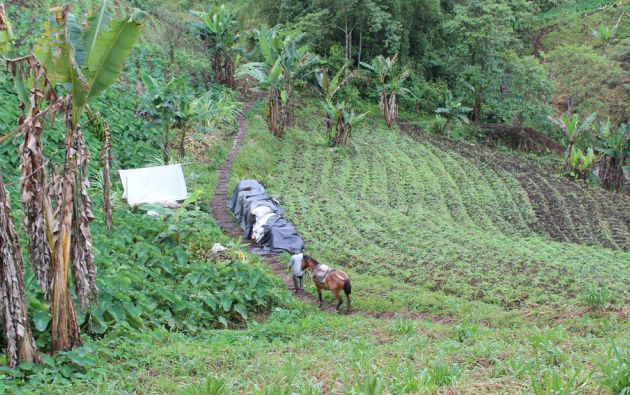 Foto: Flickr / Ministerio de Agricultura