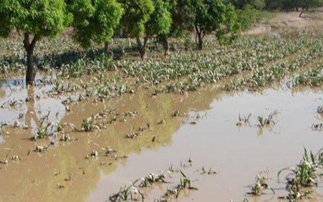 Más de 500 hectáreas de cacao, maíz y arroz quedaran bajo el agua. Foto: Archivo / Ecuavisa.