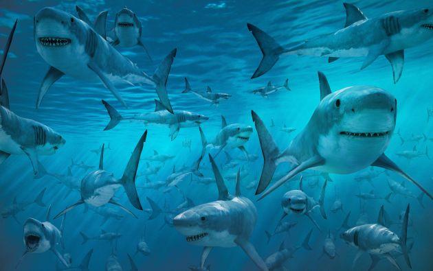La presencia de tiburones un fenómeno inusual a pesar de que en esta época del año los escualos suelen aproximarse al litoral para aparearse.