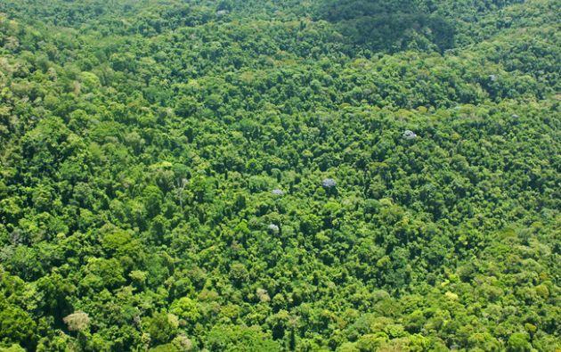 Los primeros vestigios se detectaron en 2012 en la selva del Caribe hondureño.