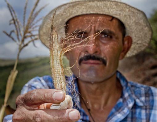 Foto: Programa Mundial de Alimentos / World Food Programme
