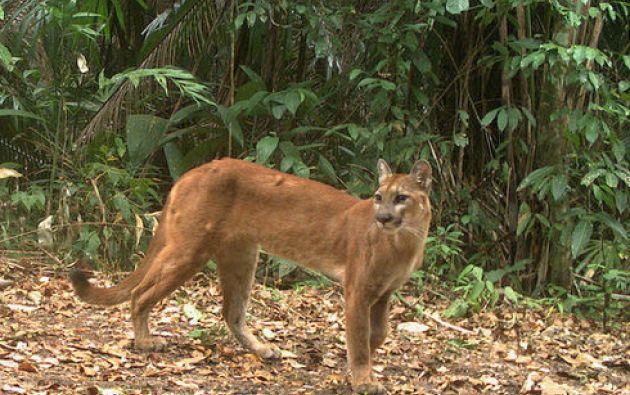 En total se han documentado 45 especies entre mamíferos y aves, algunas de las cuales se encuentran en peligro de extinción. Foto: Flickr / Conap.