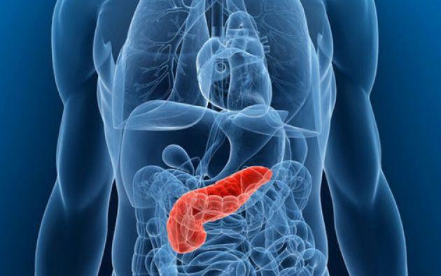 El páncreas es un órgano productor de enzimas y hormonas con un papel esencial para la vida ya que controla la digestión de los alimentos y los niveles de azúcar en sangre. Foto: Pancreatic.org