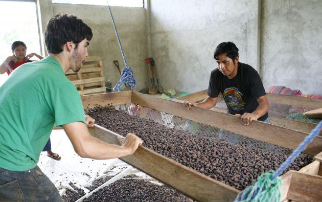 Visitantes. En Kallari se fomenta la visita de voluntarios extranjeros y el turismo comunitario. El itinerario incluye visitas a las chakras y la colaboración en las tareas relacionadas al cacao. Foto James Bassett-Can