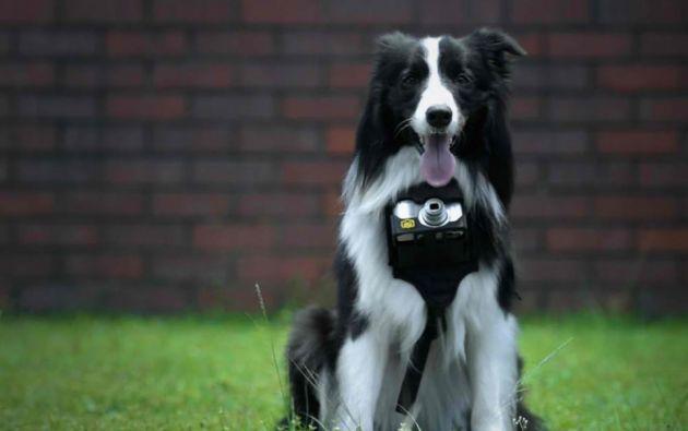 Guzzler es el can que protagoniza la campaña de esta nueva cámara.